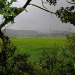 Driving in monsoon – Jog Falls, Karwar and Goa