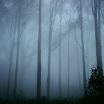 Friday Photo: Mist in the Forest