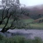 Friday Photo: Tree and Lake