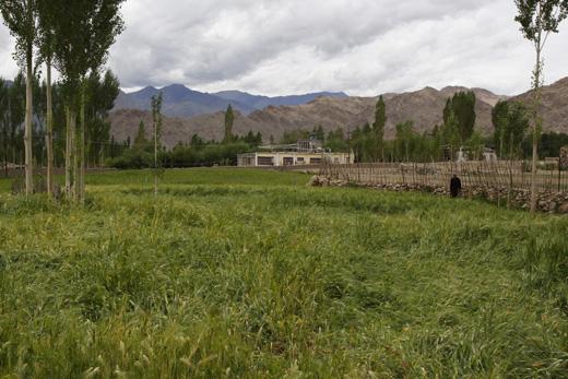 Sankar Village near Leh