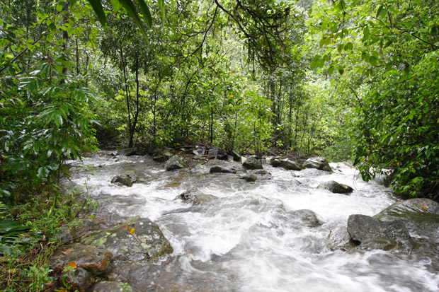a stream in coorg