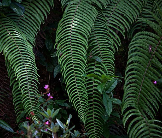 plants at Gangtok, Sikkim
