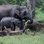 Bandipur National Park – In company of Pachyderms