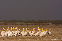 kutch photography tour