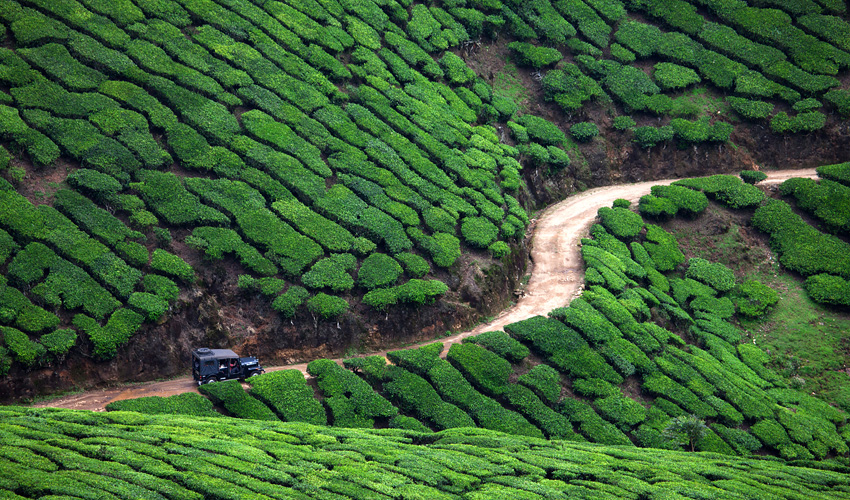 Munnar Beautiful Landscapes of Munnar