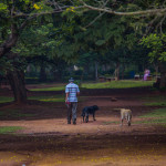 Photo: A morning walk at Cubbon Park, Bangalore
