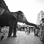 Snap Stories – With the elephant god