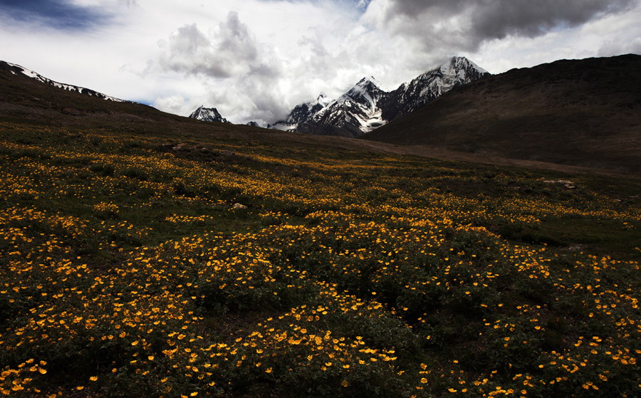 Landscape Photography and Efflorescence in Spiti Valley