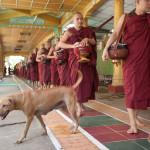 Monks at Kya Khat Wain Monastery
