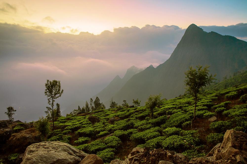 Munnar landscapes