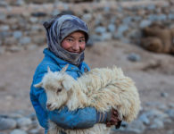 Nomadic shepherds of Changthang