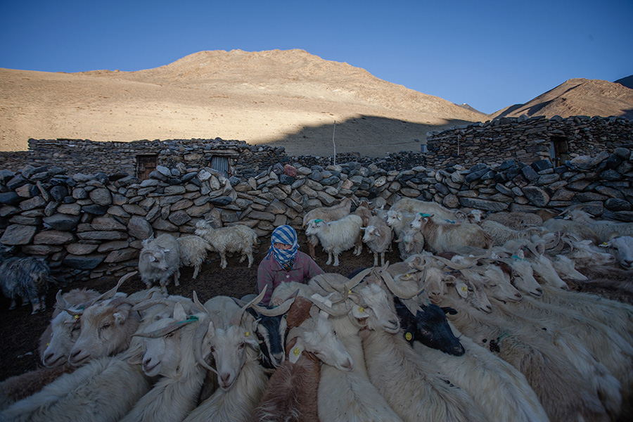 Shepherds of Changthang