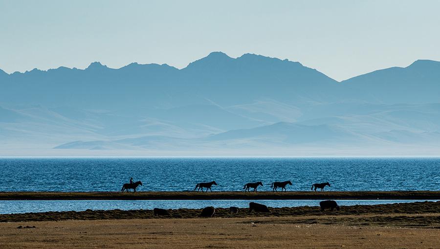 Horses at Song Kul Lake, Kyrgyzstan